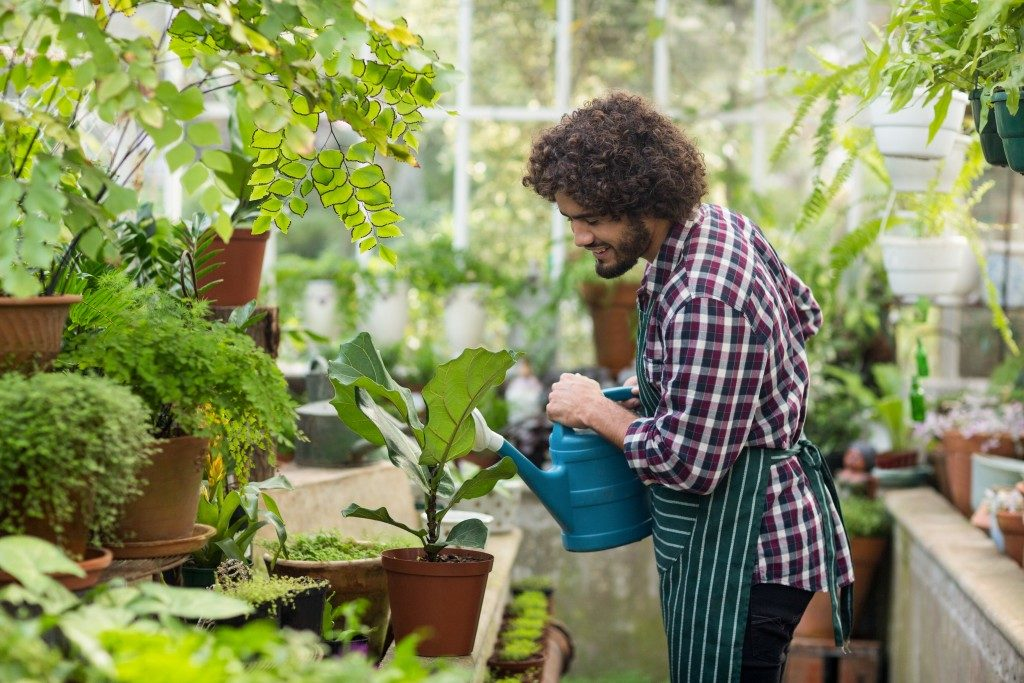 Man watering his plants in the greenhouse