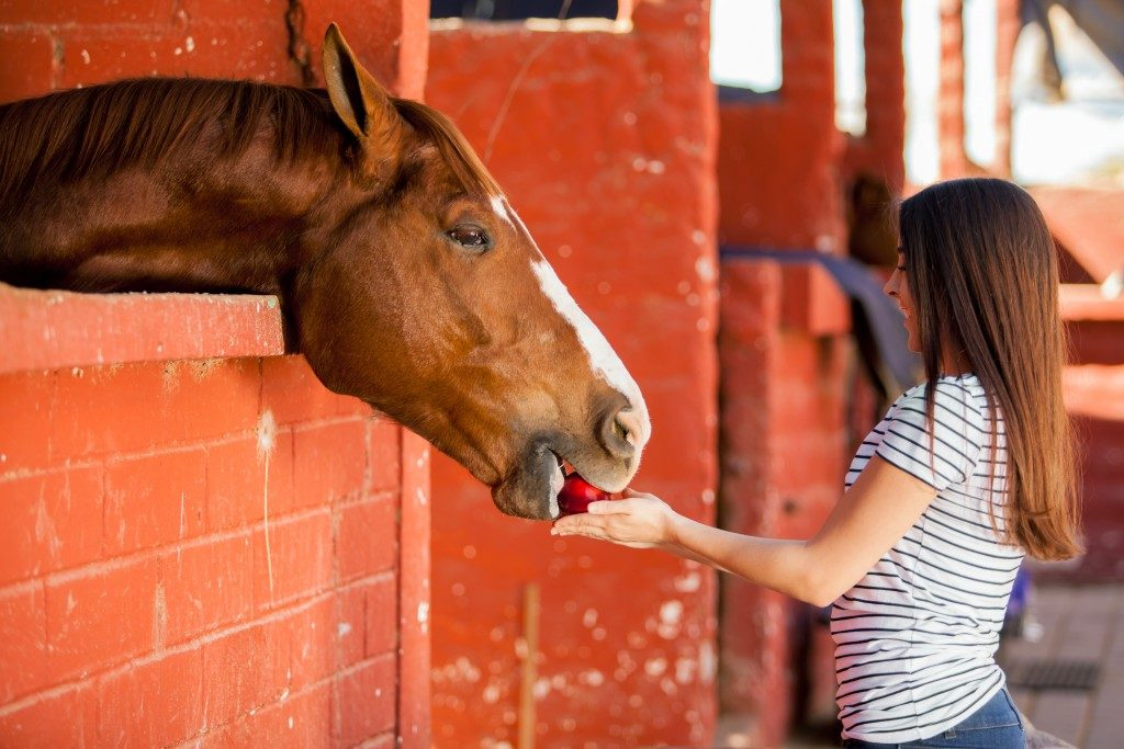 feeding the horse with an apple