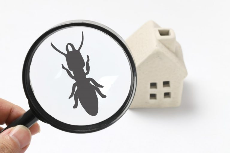 pests at home