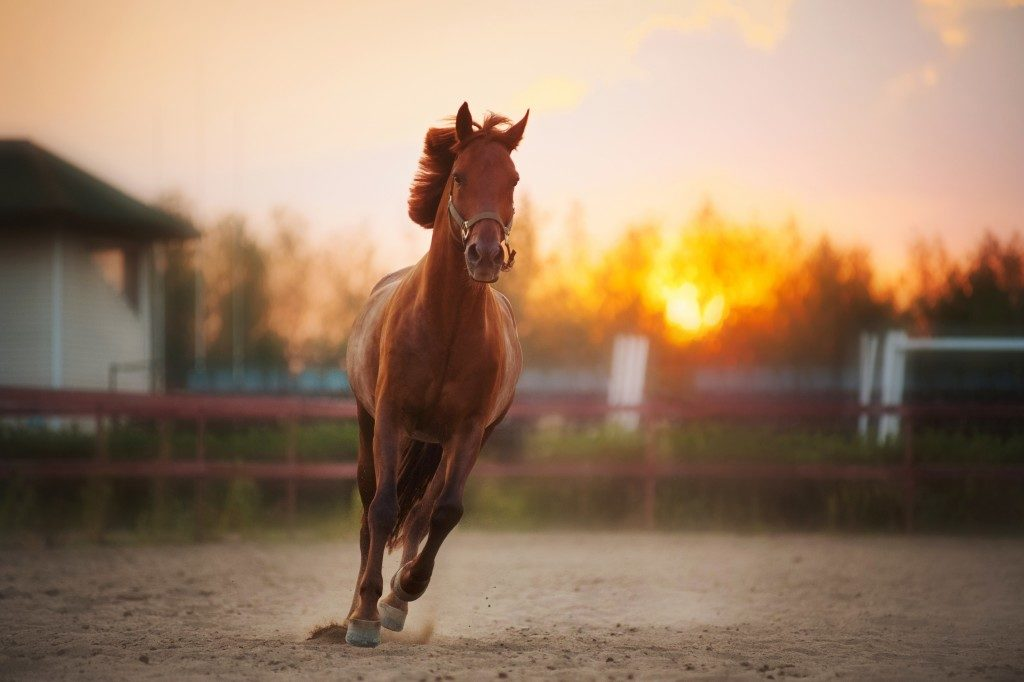 horse running around