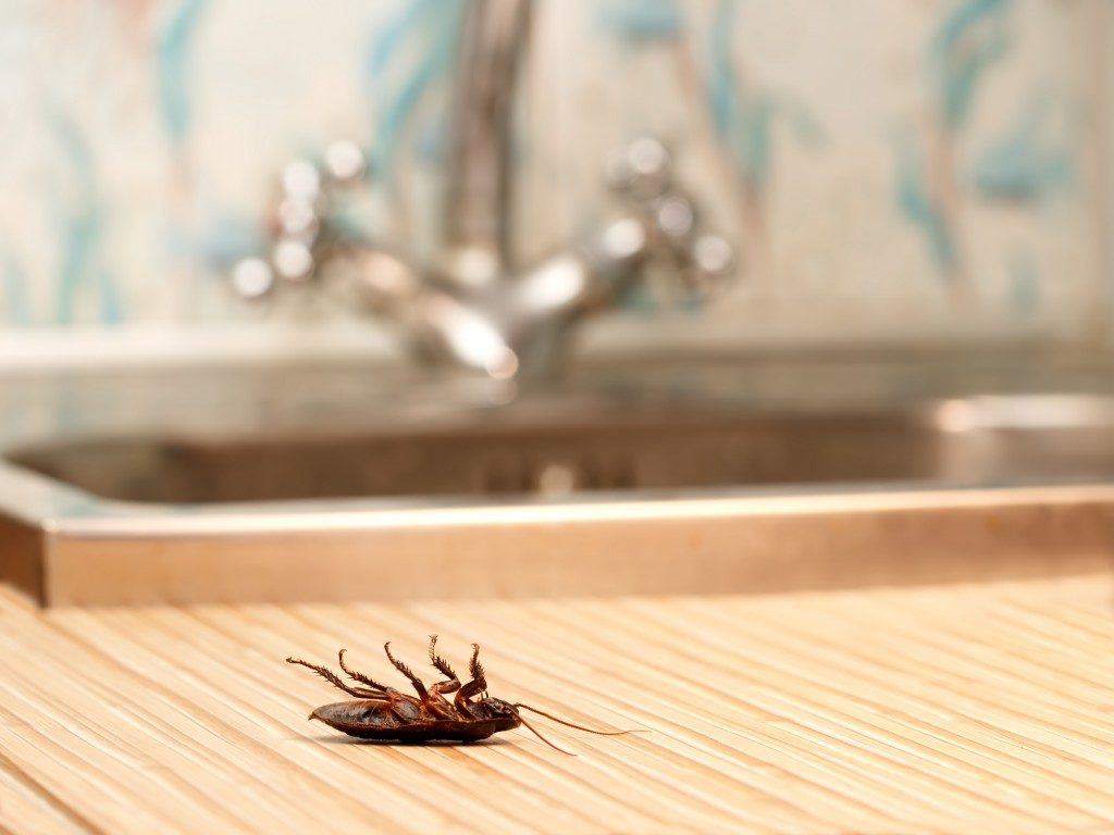 Cockroach on the sink