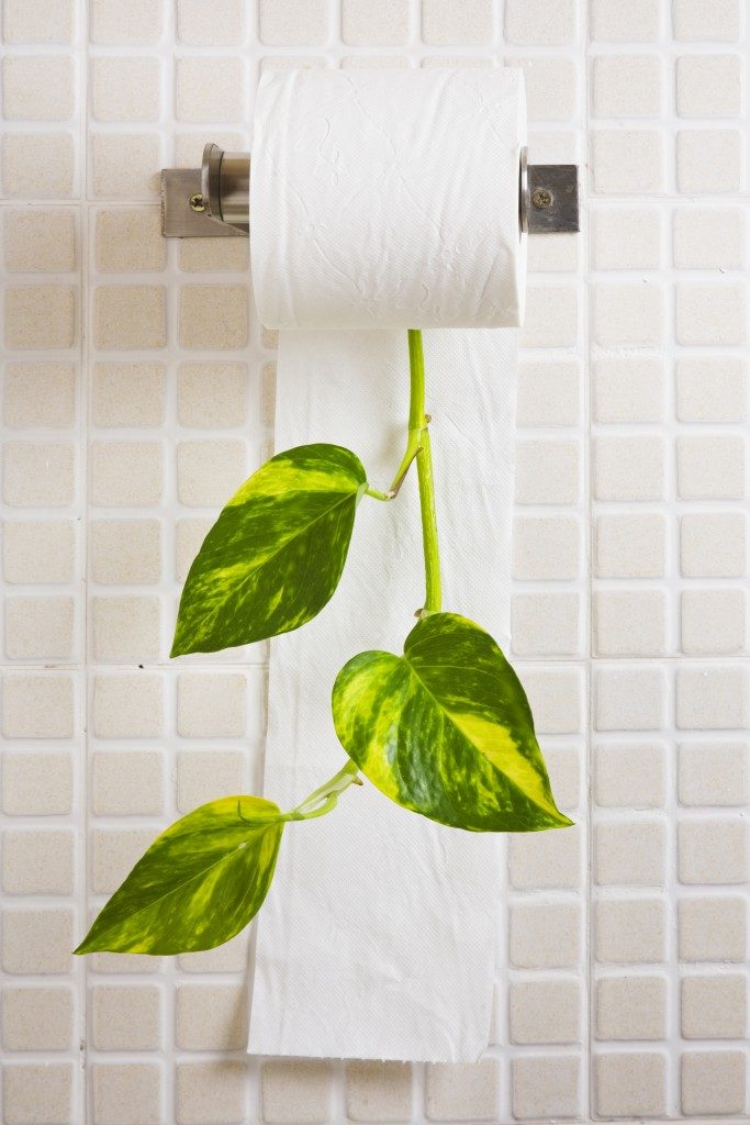Recycling concept with toilet paper