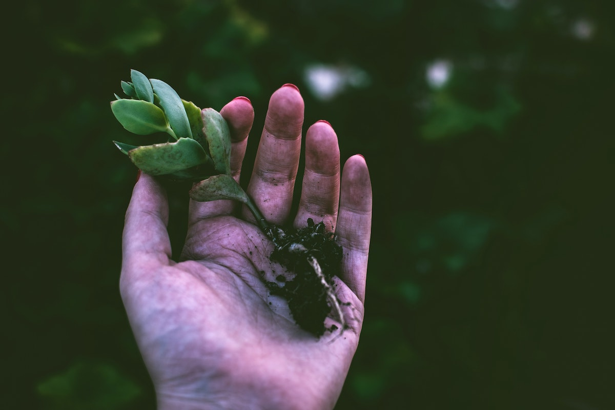 person holding a small plant