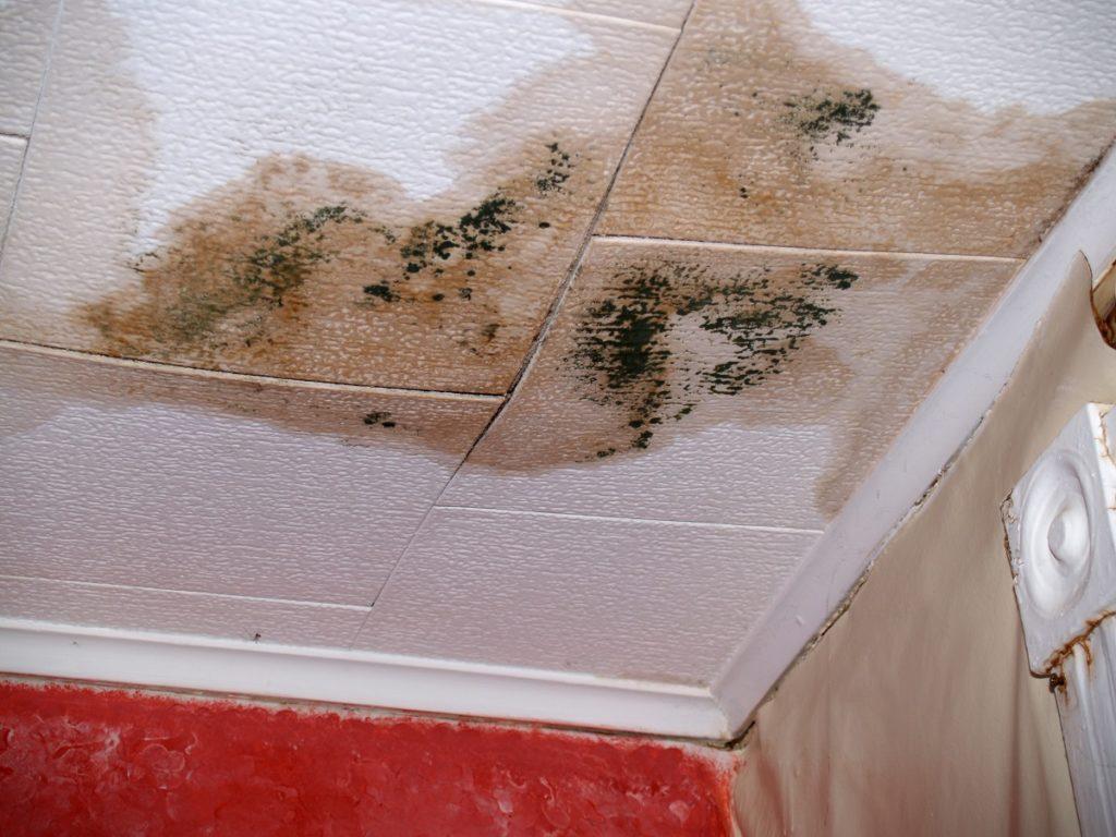 wet ceiling