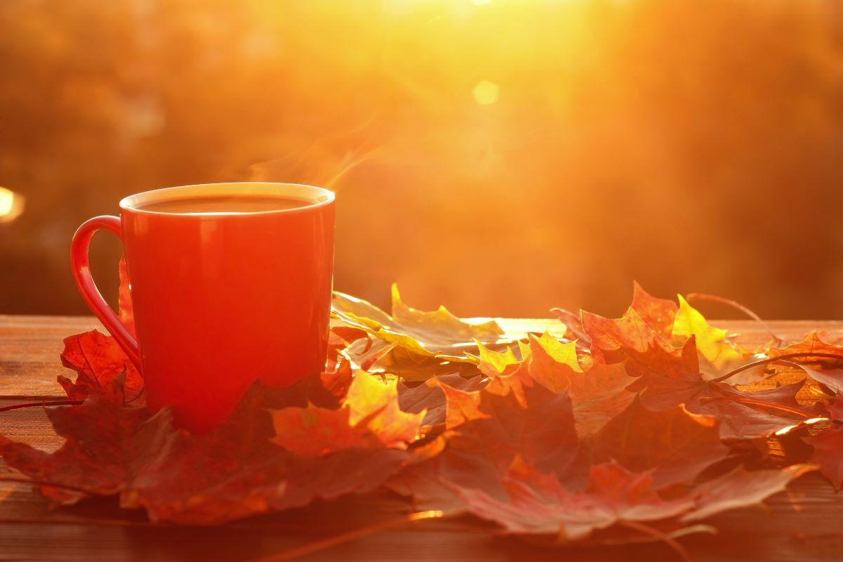 coffee mug on brown leaves from fall