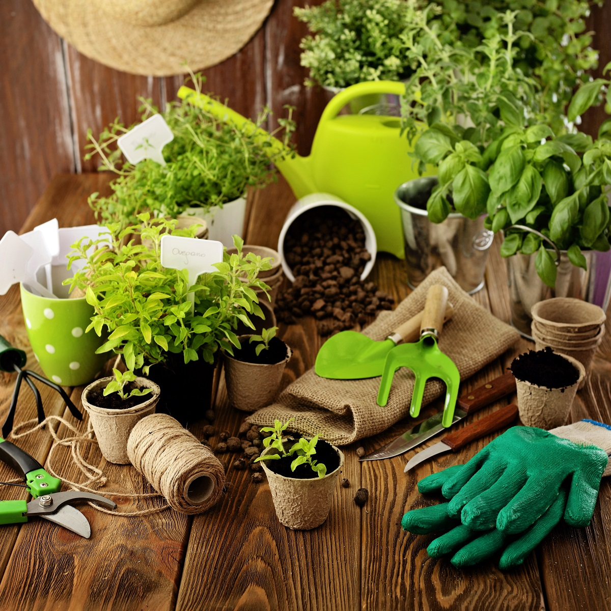 gardening materials and plants