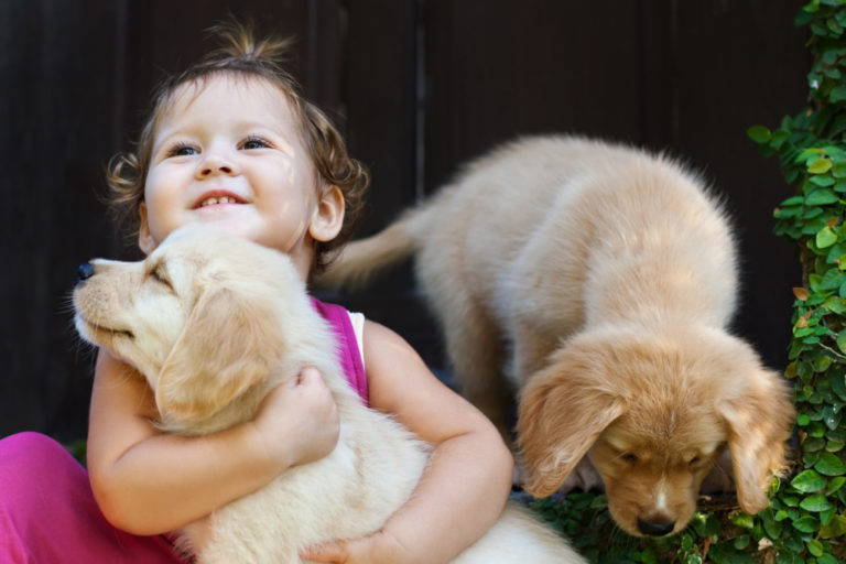 puppies with child